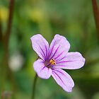 wildflower by Miriam Gordon
