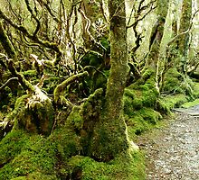 Weindorfer's Forest Walk, Cradle Mountain, Tasmania, Australia. by kaysharp
