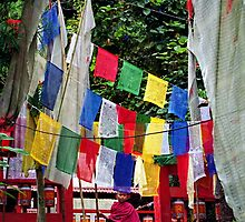 wind prayers. sikkim, india by tim buckley | bodhiimages