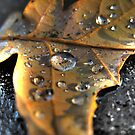 Autumn leaf by purposemaker909