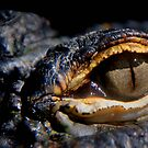 EYE OF A PREDATOR by MIKESANDY