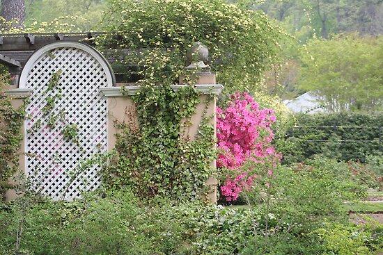 Pink Azalea Blooming by a Wall by DebbieCHayes