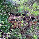Rusting Car in undergrowth by Leyh