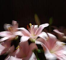Vibrations of Gentle Sounds by Lozzar Flowers & Art