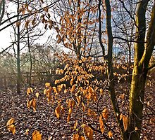 Remnants of Autumn by Pete Staples