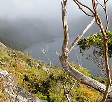 Dove Lake from Hanson's Track,Tasmania, Australia. by kaysharp