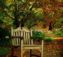The Chair ... Mt Wilson in Autumn by Rosalie Dale
