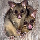 Coco and Yoyo - Australian Possum and Her Baby by Janette Rodgers