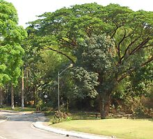 MMLDC's Pathway, Antipolo, Philippines by walterericsy