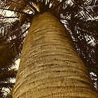 Palm Tree, Rosselba le Palme by itchingink
