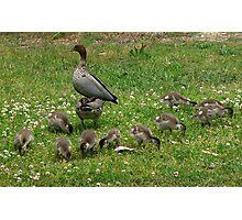 Ten little ducks... Photographic Print