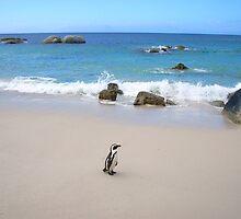 Lone Penguin by Robbie Labanowski