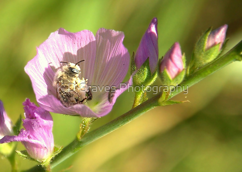 A White Bee in Pollen With A Face by Diana Graves Photography
