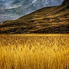The Reedbed by Karl Williams