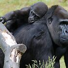 Gorilla Love by ApeArt