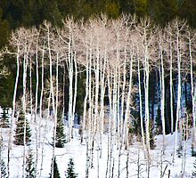 Empty Aspens by phil decocco