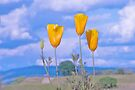 Poppies, Sky and Clouds by John Butler