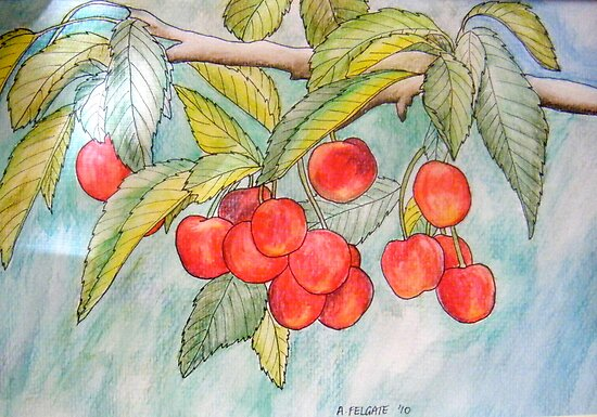 Cherries by Alexandra Felgate