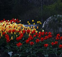 Tulips At Dusk by Joanne  Bradley