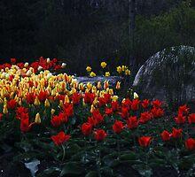 Tulips At Dusk by Joanne  Bradley