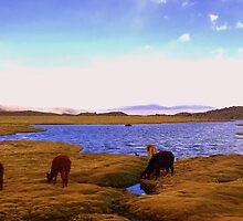 Alpacas grazing in the Altoplano- Parinacota, Chile by amygir1