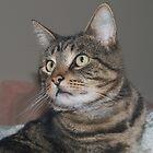 Jimmy-my Tabby Cat by johnrf