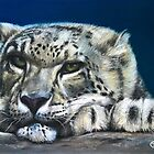 Snow Leopard Feeling Blue by Tom Godfrey