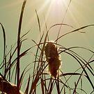 The Autumn Sun by Sarah Moore