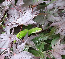 Anole in Japanese Maple by JeffeeArt4u