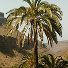 canyon palm by bizmarky