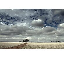 A Tree in a Field Photographic Print