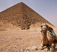 The Camel and the Pyramid by armiller007