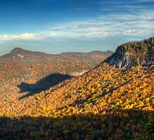 Spirit Bear - Rare Shadow Bear in Autumn by Dave Allen