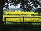 Framed rape fields by hjaynefoster