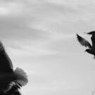 Seagulls landing by Amanda Huggins