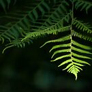 Fern by Matthew Walters