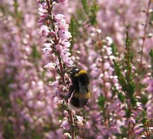 Heather Feast by Dave Godden