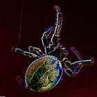 Neon Spider by Charles Dobbs Photography