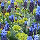 Euphorbia and Muscari by Nicole S. Moore
