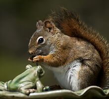Staged Red Squirrel by Roxane Bay