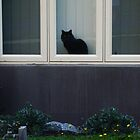 The neighbours black cat.. by shutter-bug1
