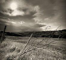 Asciano country, Tuscany, Italy by Fabio Catapane