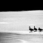 Ducks on ice by David Page
