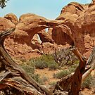 Double Arch by Linda Sparks