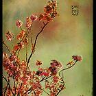 Sakura by Sonia de Macedo-Stewart