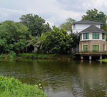 Ninoy Aquino Park and Wildlife Nature Center Lagoon by walterericsy