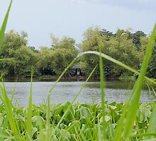 Ninoy Aquino Park and Wildlife Nature Center Lagoon's Cottage by walterericsy