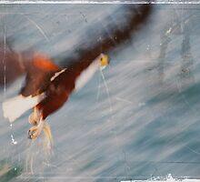 Fish Eagle - Malawi by akeys