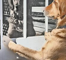 Dog reflection in the window by joyfulphotos