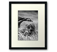 Dog 9799 b&w Framed Print